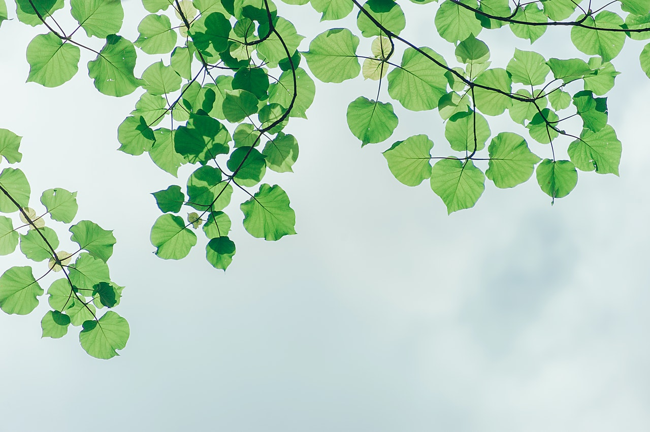 nature - green leaves and sky
